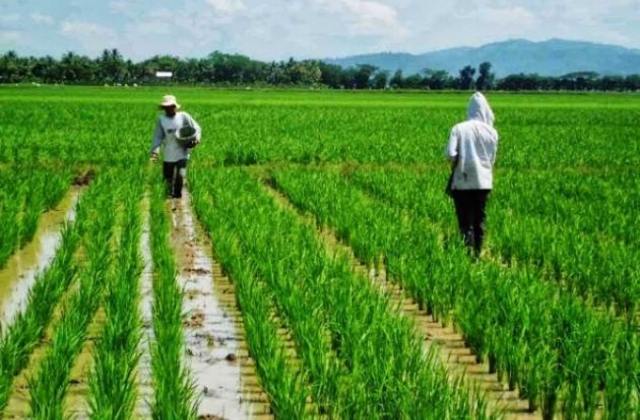 Indonesian Agriculture Imagery